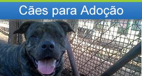 Cães para Adoção Vira-Lata Vira Vida